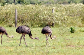 Emud tervitasid meid tagahoovis