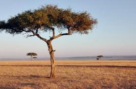 Masai Maara