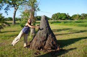 Mõõdame termatiitide kodu mastaape
