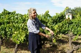 Ringkäik veinimõisa viinamarjapõllul Provences 2013
