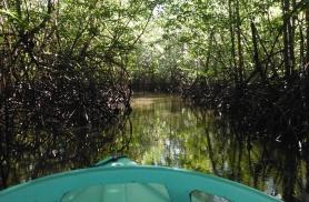 Osa poolsaarel võib näha nõiduslikke mangroovisalusid