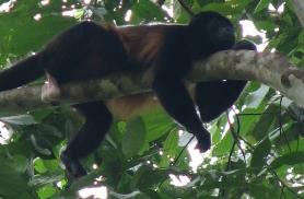 Ka ahvidele meeldib vahel laiselda