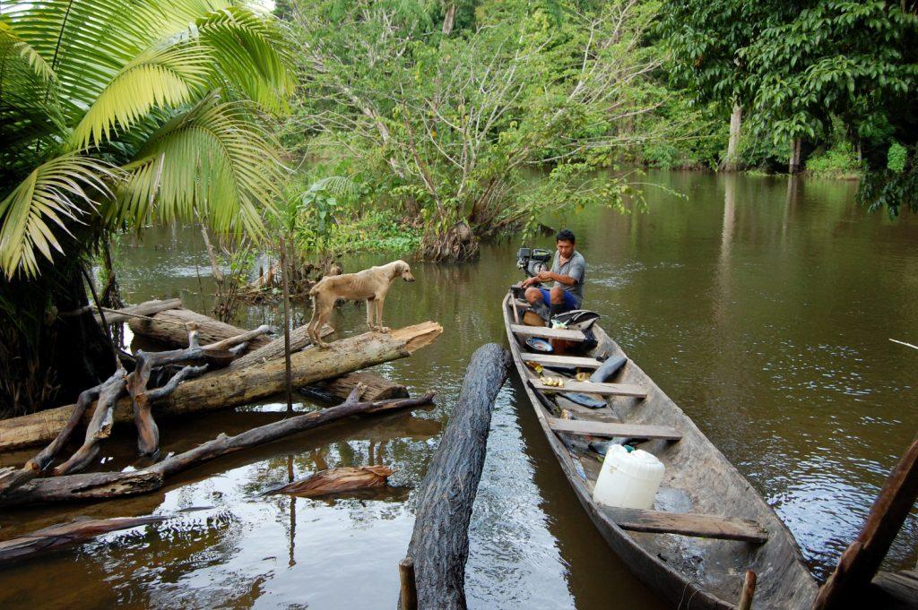 Kanuuga Amazonases