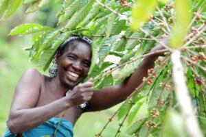 Uganda naine kohvi korjamas