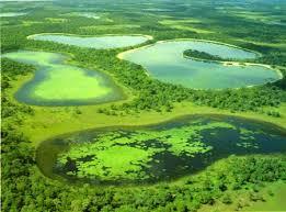 brasiilia loodus - pantanal maastik