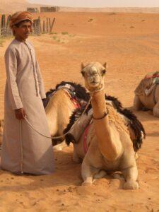 omaani kaamelid