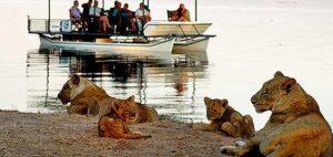 lions-boat-safari-zambia-590