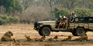 watching-lions-in-the-lower-zambezi-national-park-with-paul-grobler-2013